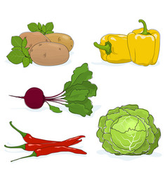 set of gardening vegetables vector image