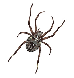 Big spider with cross-shaped drawing on a black vector image vector image
