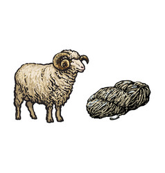 sketch cartoon horned ram cutted wool vector image vector image