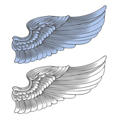 Wing in engraving style vector image