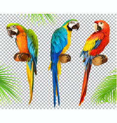 Ara parrot macaw photo realistic 3d icon set vector