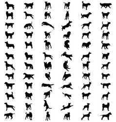 Breeds dogs vector