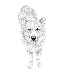 drawing of thai bangkaew dog on white background vector image