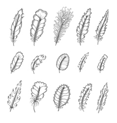 Hand drawn vintage feathers set Pen graphic vector