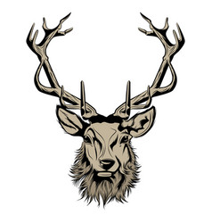 head deer vector image