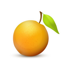 orange fruit realistic icon vector image