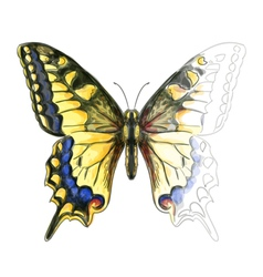 Butterfly Papillo Machaon vector image