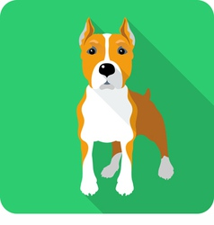 dog American Staffordshire Terrier standing icon f vector image vector image