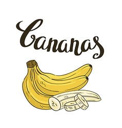 bananas isolated on the white background Hand vector image