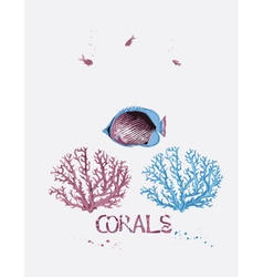 Corals and fish vector