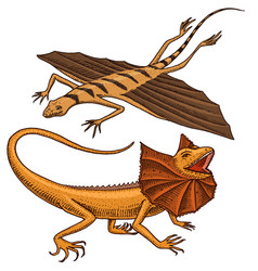 frilled-necked lizard flying dragon or agama in vector image vector image