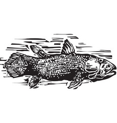 Coelacanth vector