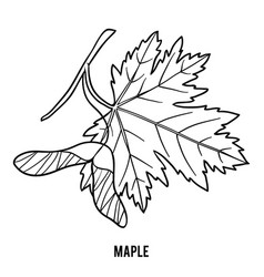 Coloring book maple leaf vector