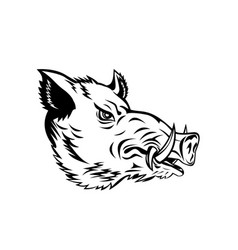 wild boar common wild pig or wild swine head side vector image
