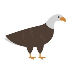 Bald eagle bird vector image