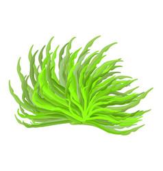 algae symbol icon design beautiful vector image
