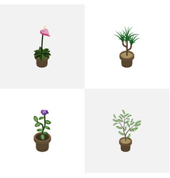 Isometric flower set of fern houseplant flower vector