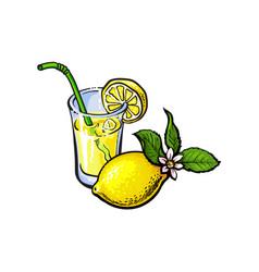 lemonade glass with straw lemon slice vector image