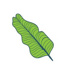 banana tree tropical leaf hand drawn vector image