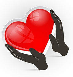 Heart in Hands Isolated on White Background vector image