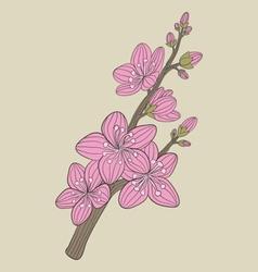 Cherry blossom flower vector