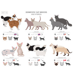 Domestic cat breeds and hybrids collection vector
