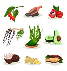 flat set of superfood goji and acai vector image