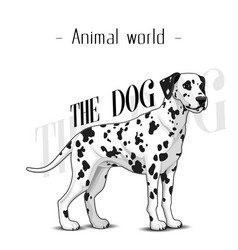 animal world the dog dalmatian background i vector image