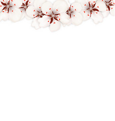 blooming sakura flowers blossom isolated vector image vector image