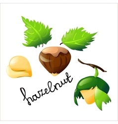 Bright cartoon hazel nut vector