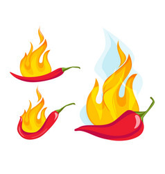 Hot red pepper exotic mexican cayenne pepper with vector