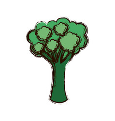 green vegetable broccoli icon vector image vector image