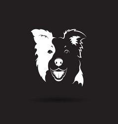 a border collie dog on black background pet vector image