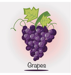 grapes fruit fruits and vegetables vector image