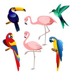 bright color exotic vector image
