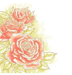 Pink roses on white background vector image