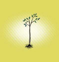 tree seedling with green leaves vector image vector image