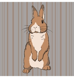 Fluffy brown standing rabbit vector image