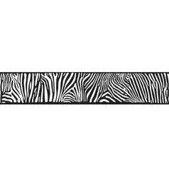 Background with Zebra skin vector image