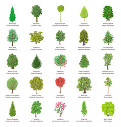 Tree types icons set isometric style vector