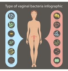 Womans vaginal flora vector