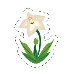 cartoon gladiolus flower image vector image vector image