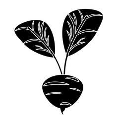 Beetroot vegetable food fresh pictogram vector