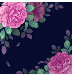 dark background with pink roses arrangement vector image