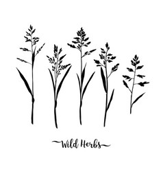 grass black silhouettes wild herbs isolated vector image