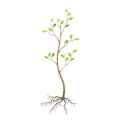 Seedling tree vector
