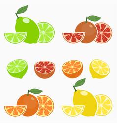 set citrus orange lime lemon grapefruit vector image