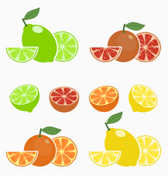 Set of citrus orange lime lemon grapefruit vector