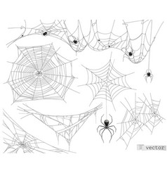 spider web set of elements vector image