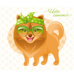 Summer fashion pomeranian spitz puppy dog in sweet vector